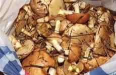 Сколько варить грибы маслята?
